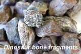 JB Memorials Stainless steel Ash Ring with Dinosaur bone fragments - CRA016_